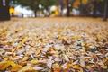 Картинка листья, осень, сухие