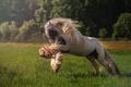 Картинка конь, луг, грива, резвится