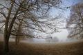 Картинка парк, деревья, туман