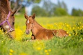 Картинка лошадь, луг, боке, жеребёнок