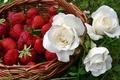 Картинка клубника, трава, лето, еда, зелень, ягоды, белые, роза, композиция, розы, бутоны, корзинка, природа, лукошко, цветы