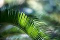 Картинка растение, зеленый, лист