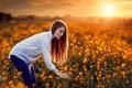 Картинка Luiz Carlos Sene, настроение, Alessandro Di Cicco, поле, девушка, рапс, закат
