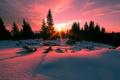 Картинка снег, солнце, ёлки