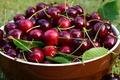 Картинка еда, урожай, черешня, природа, чашка, сочно, много, миска, пиала, блеск, плодоножки, вишня, сочная, вкусно, ягоды, ...