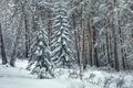 Картинка зима, лес, снег, елка