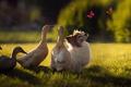 Картинка мило, друзья, няшность, лето, бабочки, няша, трава, природа, свет, щенок, лучи, домашние, насекомые, лужайка, компания, ...