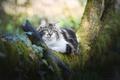 Картинка дерево, пушистая, взгляд, кошка
