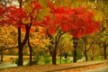 Картинка Park, Fall, Colors, Парк, Autumn, Деревья, Leaves, Листва, Осень, Trees