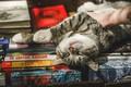 Картинка кот, котейка, расслабон, релакс, книги, кошка