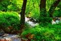 Картинка Forest, Nature, Лес, Summer, Природа, River, Лето, Речка