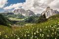 Картинка цветы, горы, луг