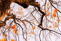 Картинка autumn, leaves, tree, branches