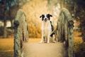 Картинка друг, мост, собака