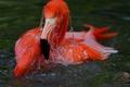 Картинка вода, птица, фламинго