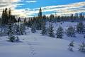 Картинка Небо, Зима, Деревья, Снег, Норвегия, Sky, Winter, Snow, Norway, Trees, Vestmarka