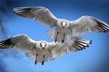 Картинка крылья, полет, птицы