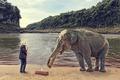 Картинка слон, саксофон, человек