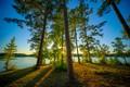 Картинка деревья, озеро, сосны, Alabama, Алабама, West Point Lake, Veasey Creek Recreation Area