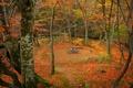 Картинка Осень, Лес, Fall, Autumn, Colors, Trees, Листопад, Leaves