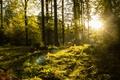 Картинка солнечный свет, лес, деревья