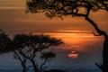 Картинка солнце, деревья, закат, Африка, Кения, заповедник, Масаи-Мара