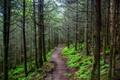 Картинка лес, деревья, дорога