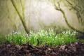 Картинка природа, весна, лес, цветы