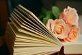 Картинка книга, розы, букет, цветы