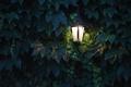 Картинка листья, виноград, свет, фонарь, освещение