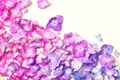 Картинка фон, гортензия, лепестки, цветы