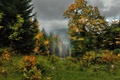 Картинка Fall, Colors, Forest, Autumn, Деревья, Лес, Пасмурное Небо, Туман, Осень, Fog, Trees
