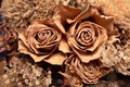 Картинка Herbarium, Roses, гербарий, Розы