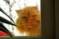 Картинка кот, в окне, взгляд кота, кошка