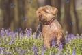 Картинка бабочки, собака, фотошоп, цветы