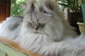 Картинка кошка, днем, на балконе, Лапочка