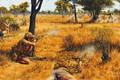 Картинка засада, Война в Южной Родезии, вооружённая борьба, Южная Родезия, перестрелка
