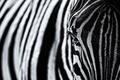 Картинка чёрно - белое фото, зебра, текстура, полоски