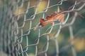 Картинка осень, лист, забор