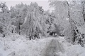 Картинка Снег, Trees, Дорожка, Зима, Forest, Лес, Snow, Frost, Winter, Path, Мороз