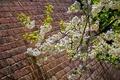 Картинка весна, Лондон, Англия, дерево