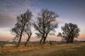 Картинка поле, деревья, закат