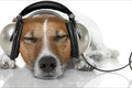 Картинка relax, oops, information, latter, animals, наушники, other, Music, dogs, собака