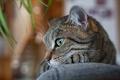 Картинка кот, глаза, отдых