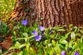 Картинка Tree, Весна, Flowers, Цветочки, Spring, Дерево