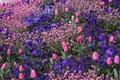 Картинка Весна, Тюльпаны, Цветочки, Flowers, Spring, Цветение, Flowering, Pink tulips