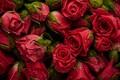 Картинка бутоны, background, fresh, roses, natural, розы, красные, фон, red, flowers, цветы