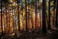 Картинка Швейцария, Langenschachen, сучья, солнце, деревья, осень, лес