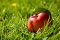Картинка плод, нектарин, трава