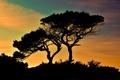 Картинка закат, силуэты, мыс, Кипр, кусты, деревья, Греко, Cavo Greco